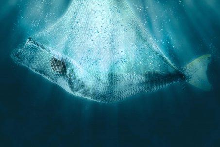 Sirena u mreži